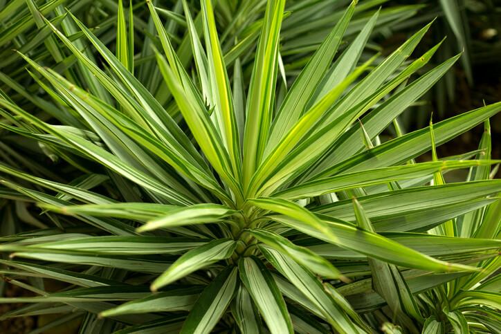 Wodurch entsteht weißer Belag auf der Pflanze